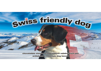 Swiss friendly dog